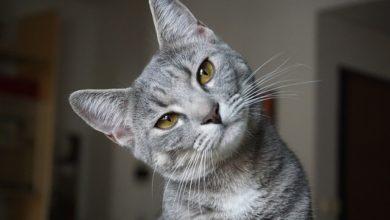 I 5 motivi per cui i gatti ci accompagnano in bagno