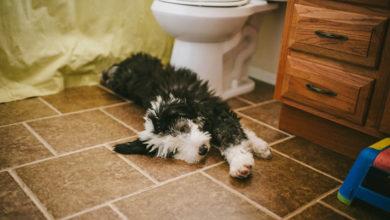 Se il cane vi segue in bagno un motivo c'è, anzi quattro