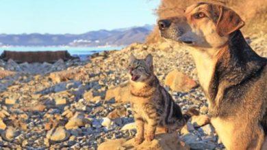 Estate: 12 consigli per proteggere cani e gatti dal caldo