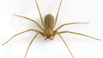 Attenzione: se vedete questo ragno chiamate subito i soccorsi [FOTO]