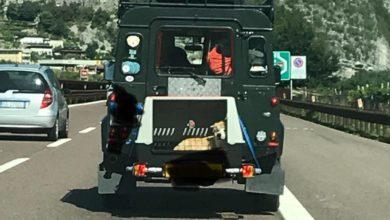 Follia in autostrada: ecco come trasportano il cane [FOTO]