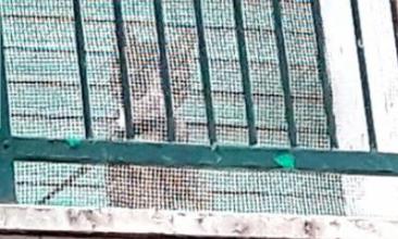 Tiene il gatto legato sul balcone: i vicini chiedono aiuto [FOTO]