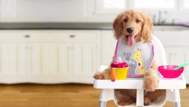 Cane: ecco il cibo che gli allunga la vita