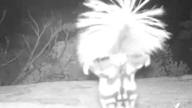 La videocamera cattura la misteriosa creatura: ecco cosa fa [VIDEO]