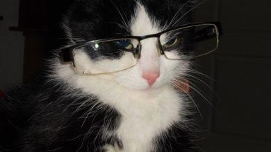 Il mistero del gatto che porta a casa gli occhiali