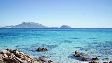 raro avvistamento in Sardegna
