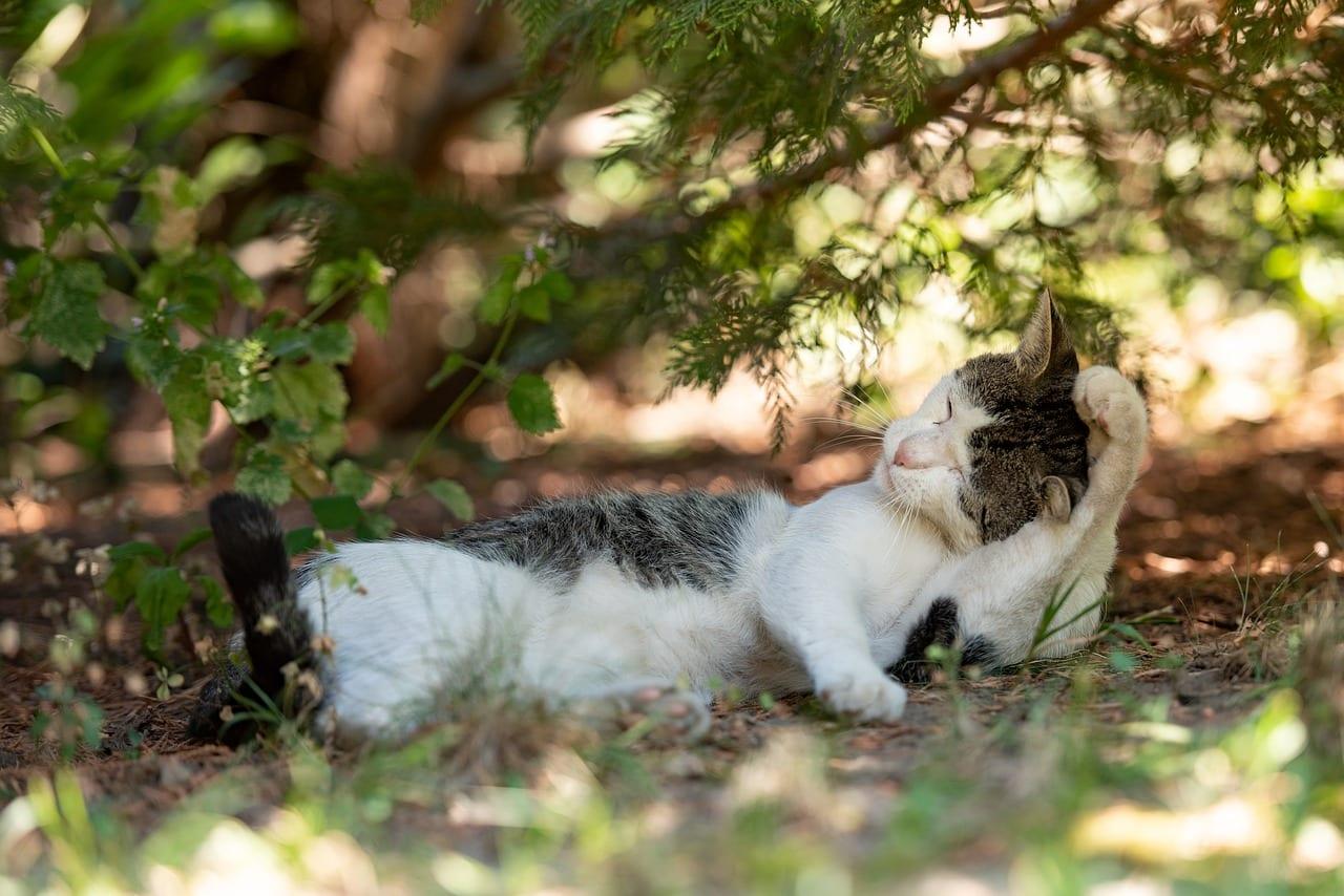 gatti grattano orecchie