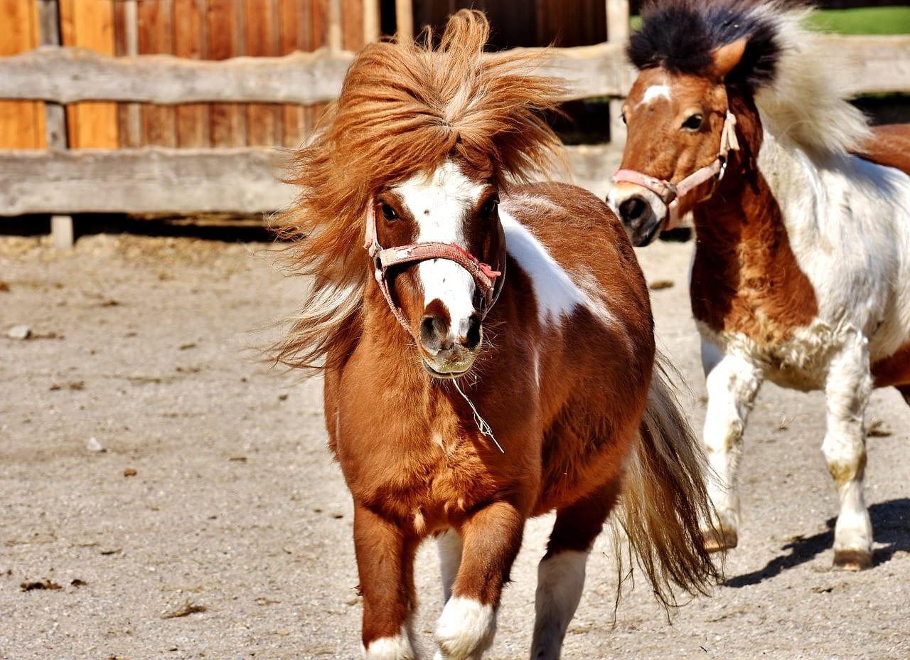 pony pet therapy