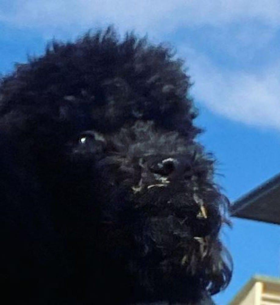 Ambra Angiolini cane Bugo
