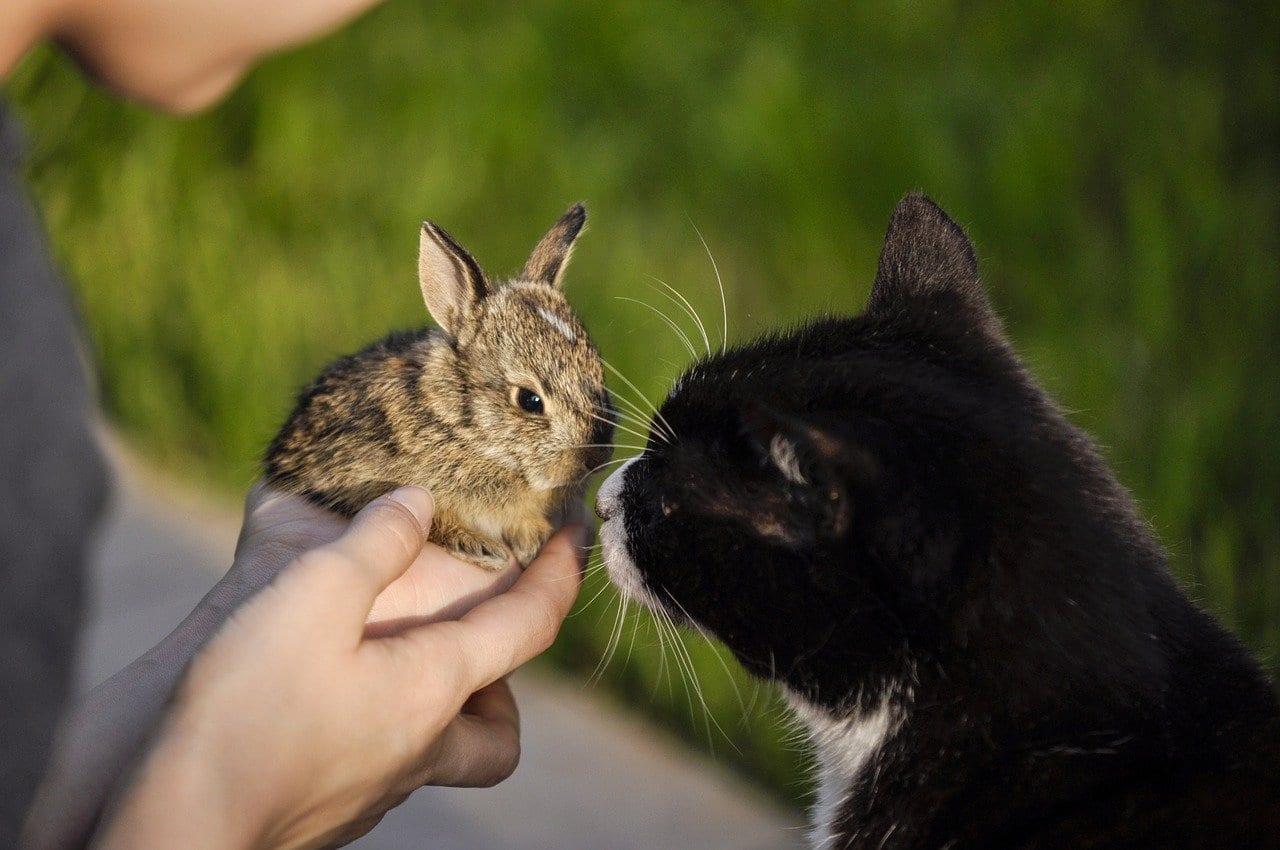 gatto coniglio convivenza