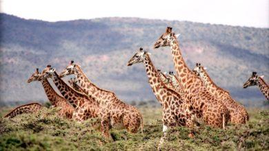 Giornata Mondiale Giraffa
