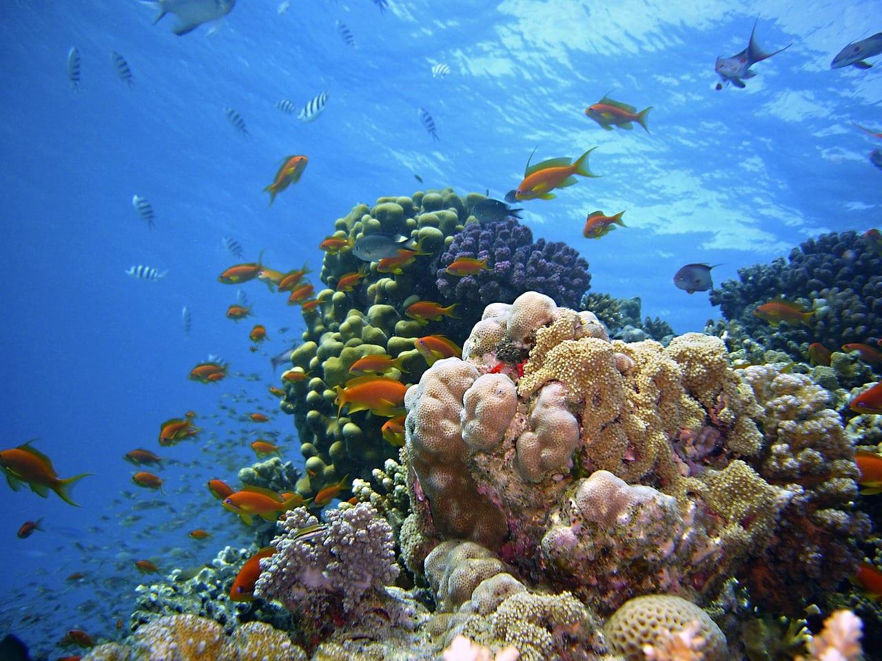 Giornata Mondiale Oceani minacce pesci