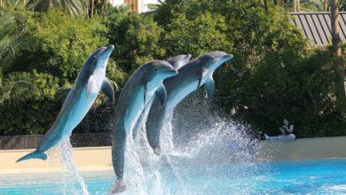 addestramento delfini pro e contro