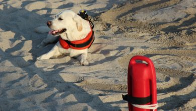 Addestrare cane bagnino