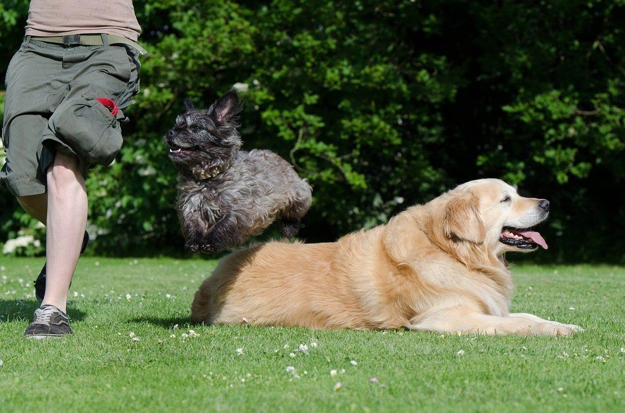 addestrare cani piccoli e grandi