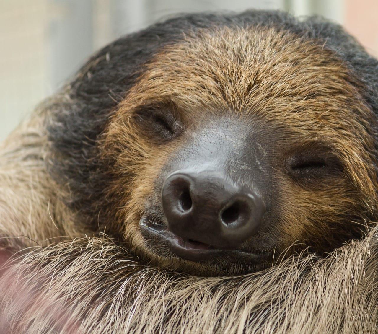 animali che dormono tanto