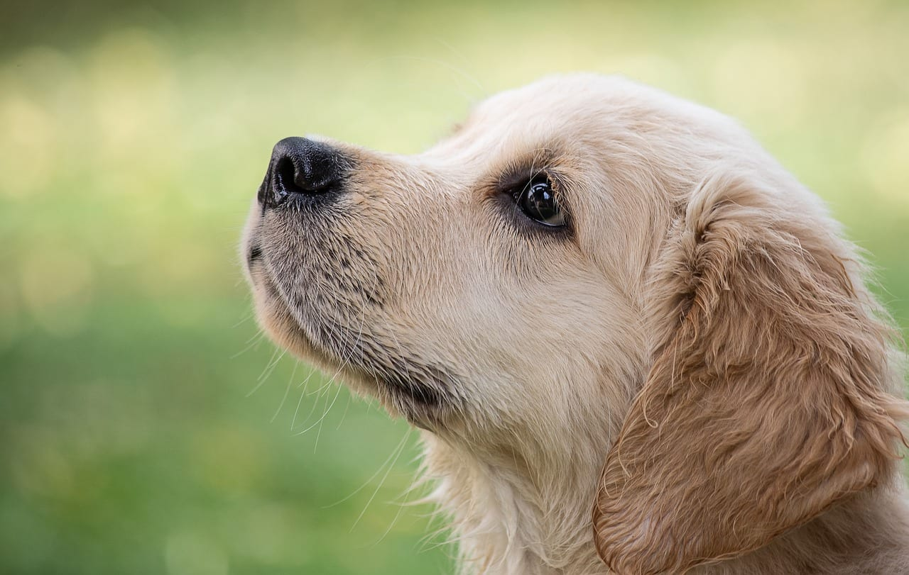 cane intrappolato nel pelo trasformato