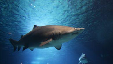 squalo Terracina Ponza