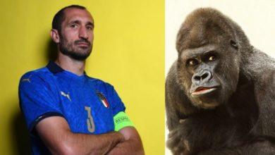 Giorgio Chiellini gorilla video