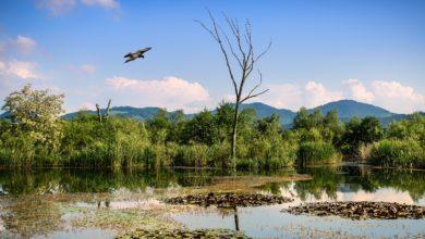Oasi WWF protette strumenti tecnologi Huawei