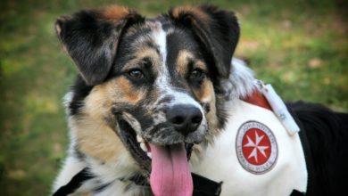 addestramento a distanza cani salvataggio