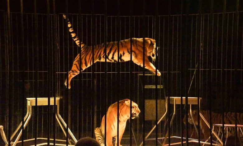 addestramento animali circo