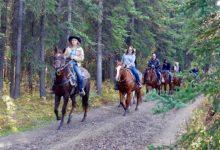 addestrare cavalli passeggiate