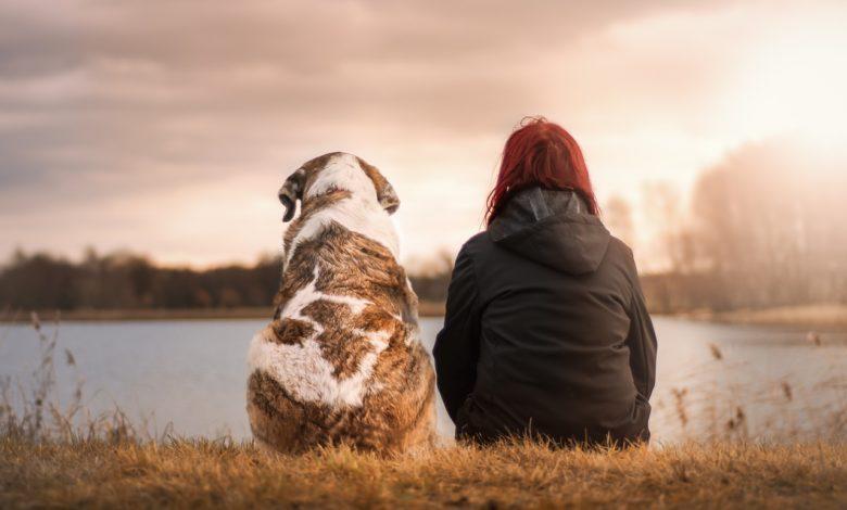 amicizia uomo animale