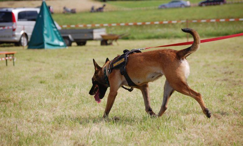 cani molecolari mantrailing addestramento