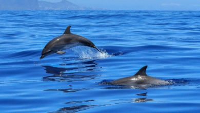 delfini Taranto