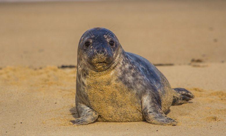 foca monaca coppia multata