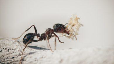 formica nuova specie Italia
