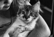 gatti bambini convivenza
