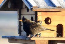 mangiatoie uccelli dipendenza cibo artificiale