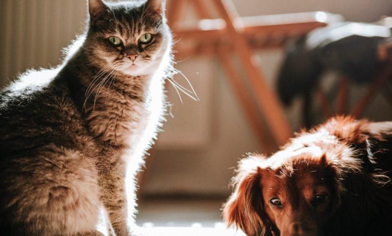 repellenti zanzare naturali cani gatti