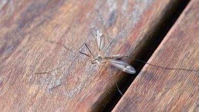 zanzare pungono in inverno