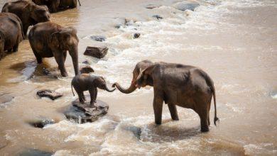 Giornata Mondiale Elefante