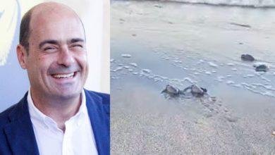 Nicola Zingaretti tartarughe marine