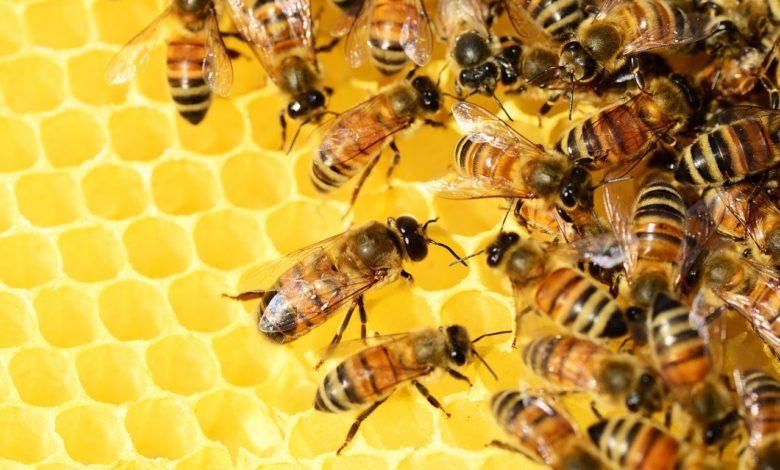 casa api Riccione