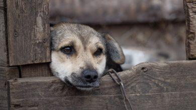 divieto catene cani