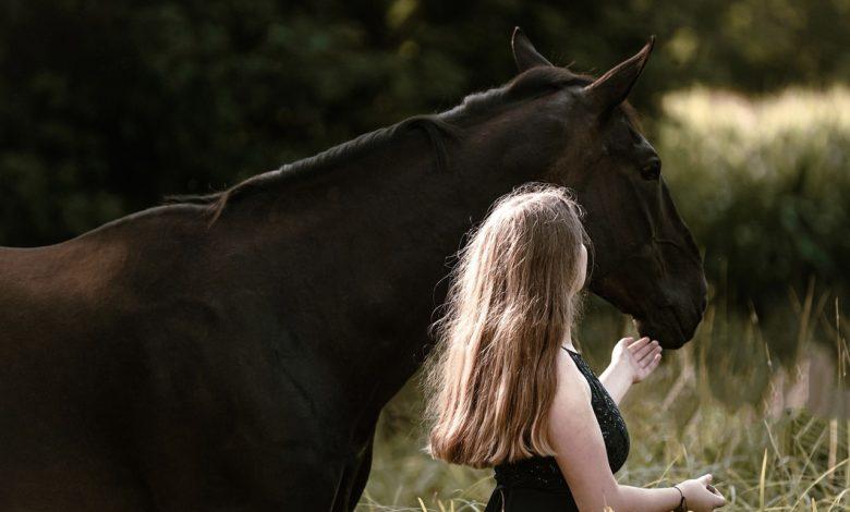 doma gentile cavallo addestramento
