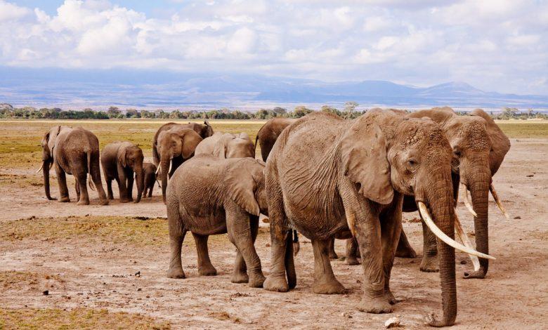 elefanti Sri Lanka divieto guida stato ebbrezza