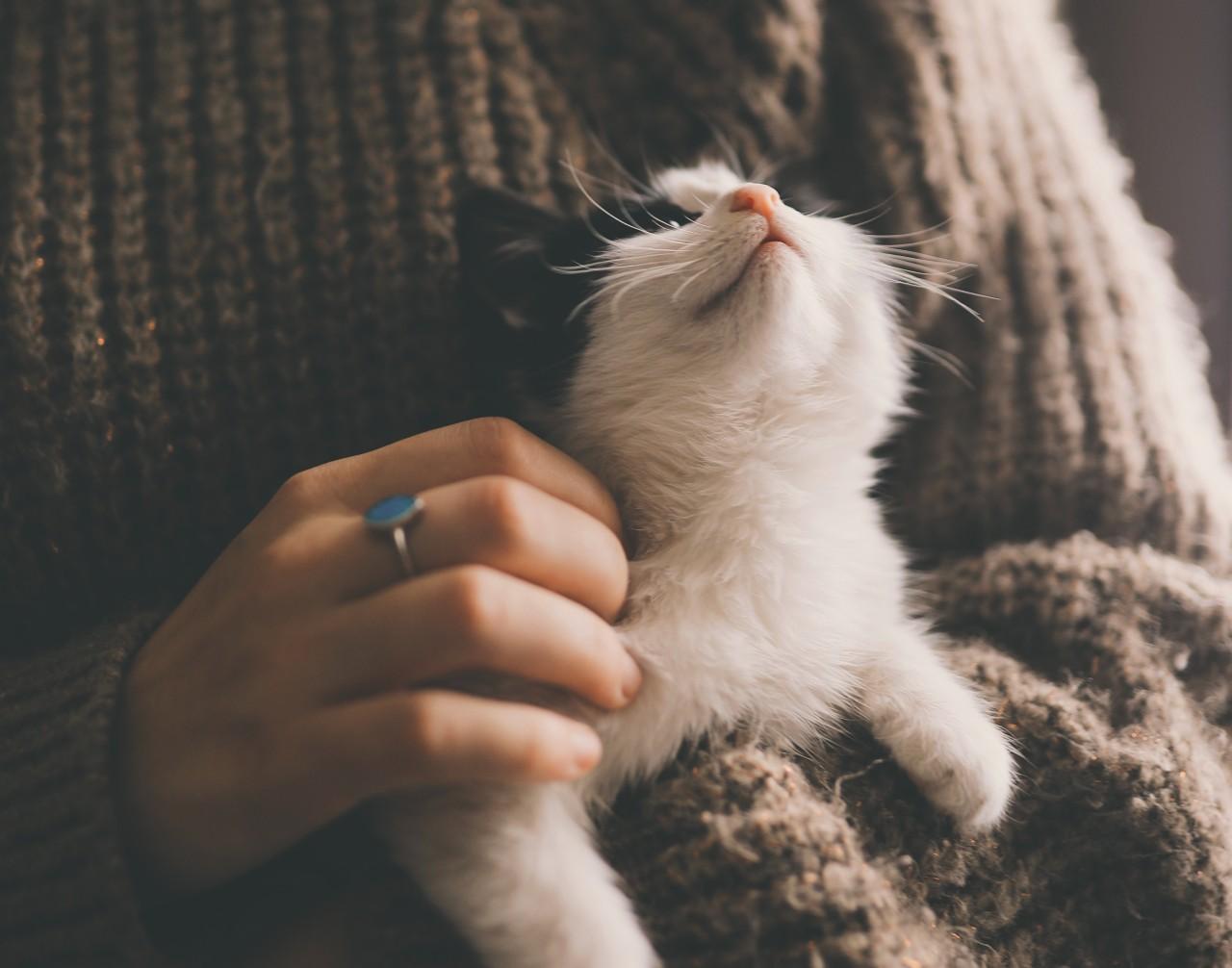 gatti affettuosi dopo pandemia