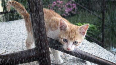 gatti meteoropatici