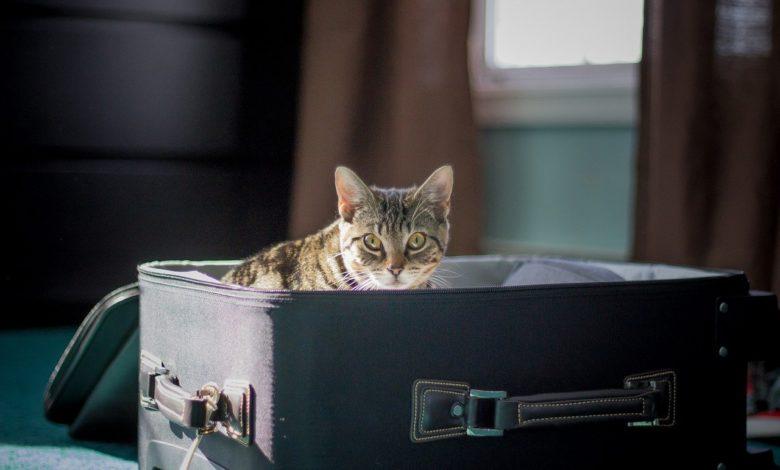 gatti vacanza estero