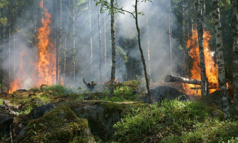 incendi Italia strage animali