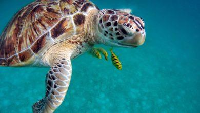tartarughe marine nidi