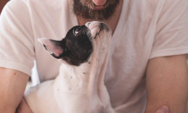 Giornata Mondiale Amanti Cani