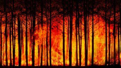 Incendi allarme WWF estinzione