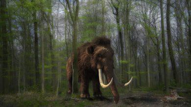 Mammut ritornano in vita